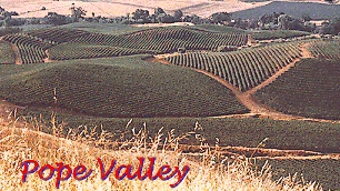 Vines in the Pope Valley, 78K